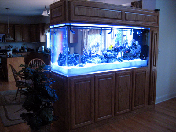 Deep or shallow tank reef central online community - Fish tank partition wall ...
