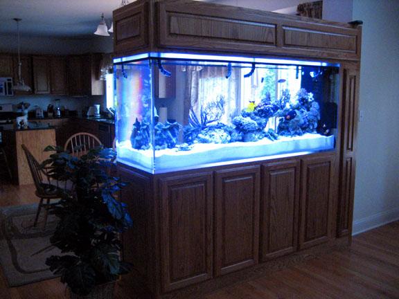 Top fin 125 gallon aquarium 1000 aquarium ideas for Fish tank divider 55 gallon
